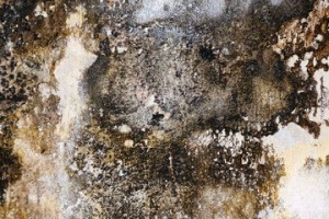 Health Damaging Mould